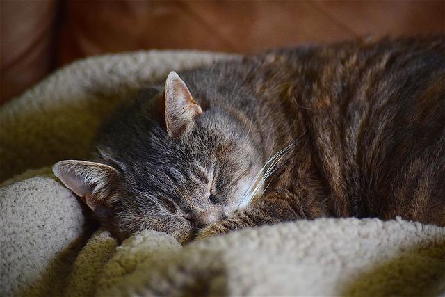 spící kočka, pelíšek