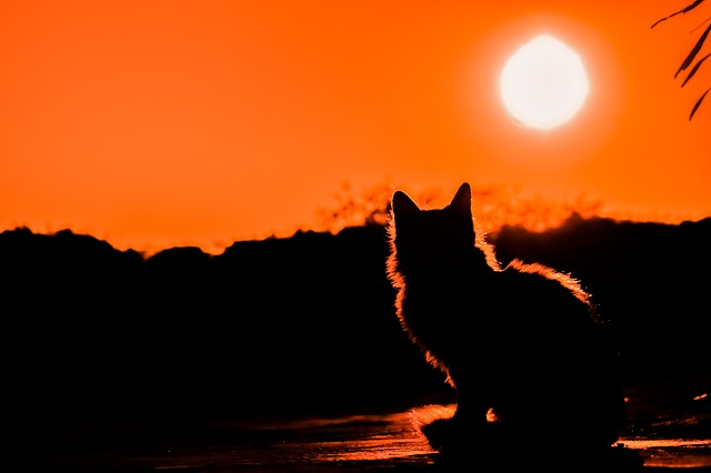 západ slunce a kočka